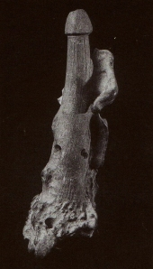 Deer bone phallic object Miyazai Numazu shellmound Final Jomon Tokai U