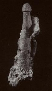 Deer bone phallic object Miyazai Numazu shellmound Final Jomon Tokai U