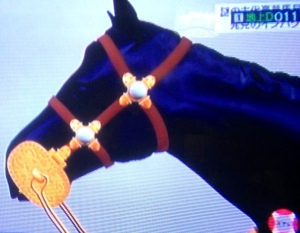 horseheadphoto