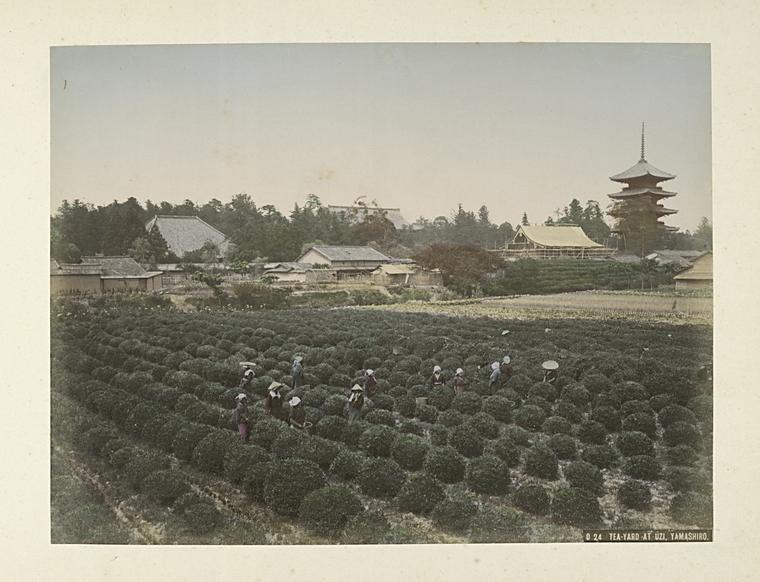 Tea-Yard_at_Uzi,_Yamashiro_(3109909163)